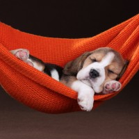 5 Steps to Unleash the Significant Power of Sleep